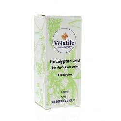 Eucalyptus wild