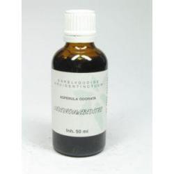 Asperula odorata / lievevrouwen bedstro
