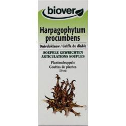 Harpagophytum procumb