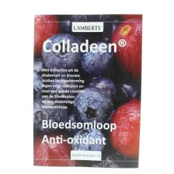 colladeen Lamberts flyer